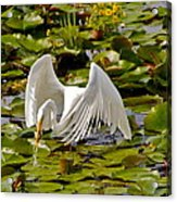 Saturday Afternoon Lunch Acrylic Print