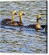Saturday Swim Acrylic Print