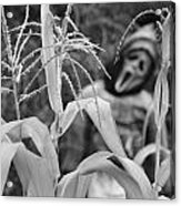 Scarecrow In The Corn Black And White Acrylic Print