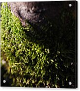 Scarf Of Green Acrylic Print