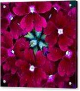 Scarlet Bouquet  Acrylic Print