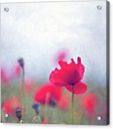Scarlet Poppies In Painterly Style Acrylic Print