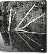 Scenes From The Kayak    Downed Trees Of The Ec River Back Waters Acrylic Print by Artist Orange