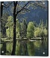 Scenic View Of The Merced River Acrylic Print