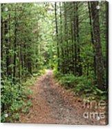 Scenic Walk Acrylic Print