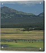 Scenic Wyoming Landscape With Grazing Acrylic Print