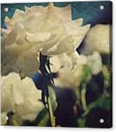 Scent Acrylic Print by Laurie Search