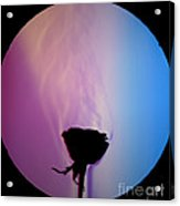 Schlieren Image Of A Roses Aroma Acrylic Print