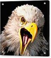 Screaming Eagle II Black Acrylic Print