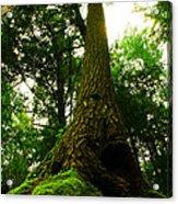 Screaming Tree Acrylic Print by Kamil Swiatek