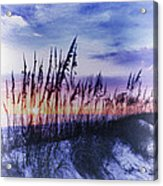 Se Oats 2 Acrylic Print