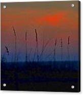 Sea Grass Rainbow Acrylic Print