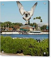 Sea Gull With Full Flaps Acrylic Print