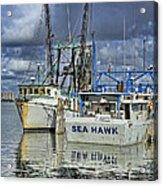 Sea Hawk Under Cover Acrylic Print