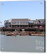 Sea Lions At Pier 39 San Francisco California . 7d14273 Acrylic Print