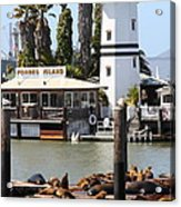 Sea Lions At Pier 39 San Francisco California . 7d14296 Acrylic Print by Wingsdomain Art and Photography
