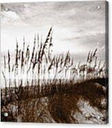 Sea Oats 1 Acrylic Print
