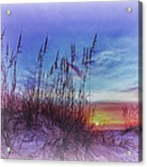 Sea Oats 5 Acrylic Print
