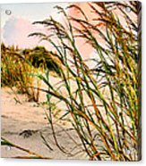 Sea Oats And Dunes Acrylic Print by Kristin Elmquist