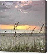 Sea Oats - Boca Grande Acrylic Print