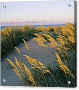 Sea Oats, Dunes, And Beach At Oregon Acrylic Print