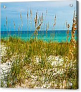 Sea Oats Gulf - Destin Acrylic Print