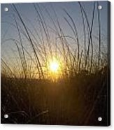 Sea Oats In The Sunset Acrylic Print