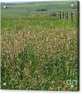 Sea Of Grass Acrylic Print