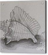 Sea Shell Acrylic Print by Debra Piro