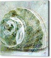 Sea Shell I Acrylic Print