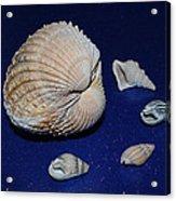 Sea Shells Acrylic Print
