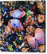 Sea Shells Sea Life Acrylic Print