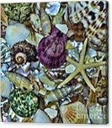 Sea Treasure - Square Format Acrylic Print