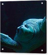 Sea Turtle In Deep Ocean Acrylic Print
