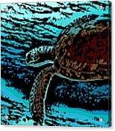 Sea Turtle Swimming Acrylic Print