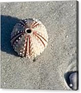 Sea Urchin And Shell Acrylic Print