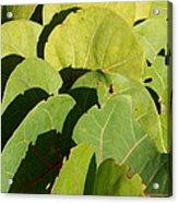 Seagrape Leaf Layer Acrylic Print