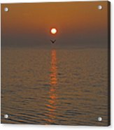 Seagull At First Light Acrylic Print