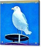 Seagull Fun Colors Acrylic Print