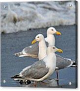 Seagull Fusion Acrylic Print