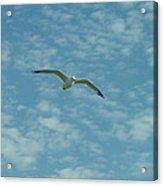 Seagull In Sky Acrylic Print