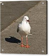 Seagull In The Summer Sun Acrylic Print by Ulrich Schade