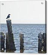 Seagull On A Post Acrylic Print