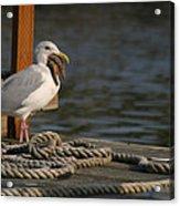Seagull Swallows Starfish Acrylic Print
