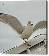 Seagull With Character Acrylic Print