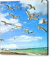 Seagulls At Worthing Sussex Acrylic Print