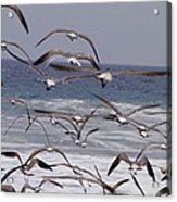 Seagulls Fly Over Surf Acrylic Print