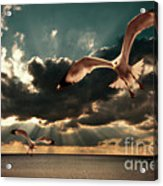 Seagulls In A Grunge Style Acrylic Print by Meirion Matthias