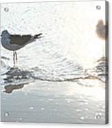 Seagulls In A Shimmer Acrylic Print