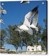 Seagulls On Anna Maria Island Acrylic Print